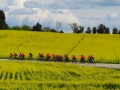 Bikecat-Marks-Tour-of-Catalunya-2019-008