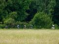Bikecat-Transpirinaica-Tour-2019-065