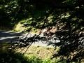 Bikecat-Transpirinaica-Tour-2019-191